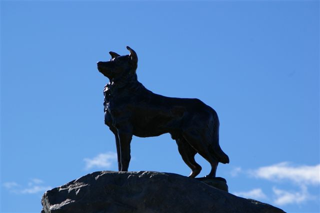 Memorial to the New Zealand Cattle Dog From Dr. Acock's Trip in 2007